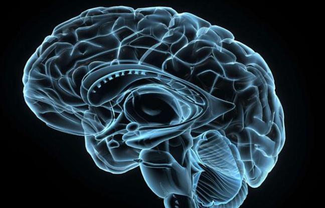 Le cerveau, le super ordinateur