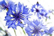 Mon herbier 2.0 : le pouvoir des fleurs