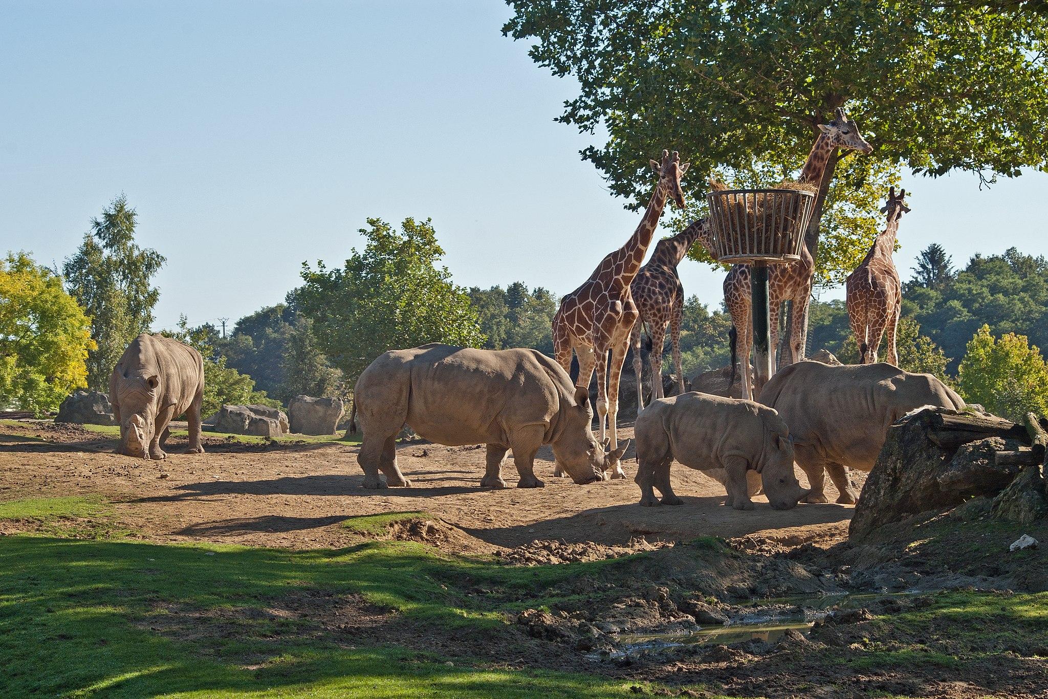 Zoo de Beauvais (Flickr, David Jolivet)