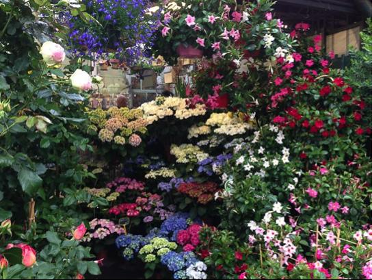 Connaissez-vous le marché aux fleurs de Paris ?