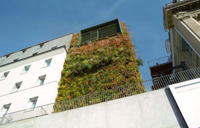 Un mur végétalisé à Paris