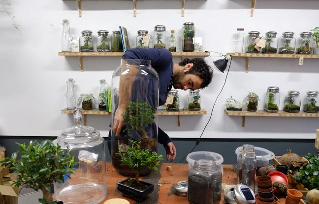 En ville, le terrarium prend racine