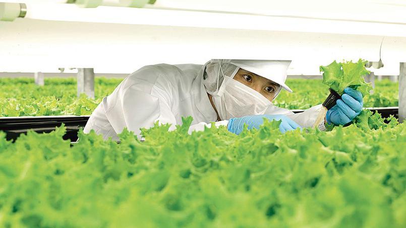 Au Japon, des robots agriculteurs