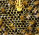 « Des femmes pour les abeilles » : la première remise des diplômes