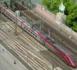 Alliance de Thalys et Eurostar : la SNCF relance le projet