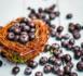 Compléments alimentaires : consommez responsable!