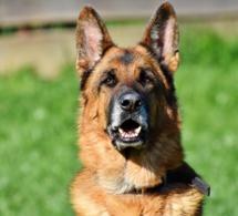 Dix-huit mois requis contre une éleveuse qui a mis le feu à un chien