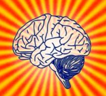 Compléments alimentaires pour le cerveau : inutiles voire dangereux selon 60 millions de consommateurs