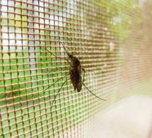 L'inquiétante stagnation des progrès de la lutte contre le paludisme